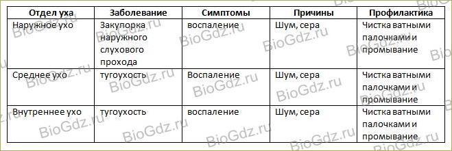 12. Анализаторы и органы чувств - 7