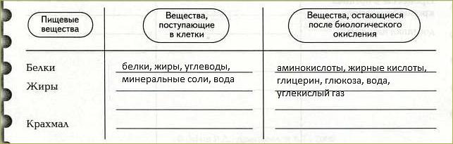 Обменные процессы в организме - 4