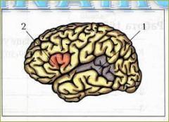 Спинной мозг. Головной мозг - 9