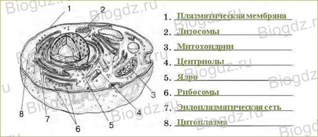 Клеточное строение организма - 1