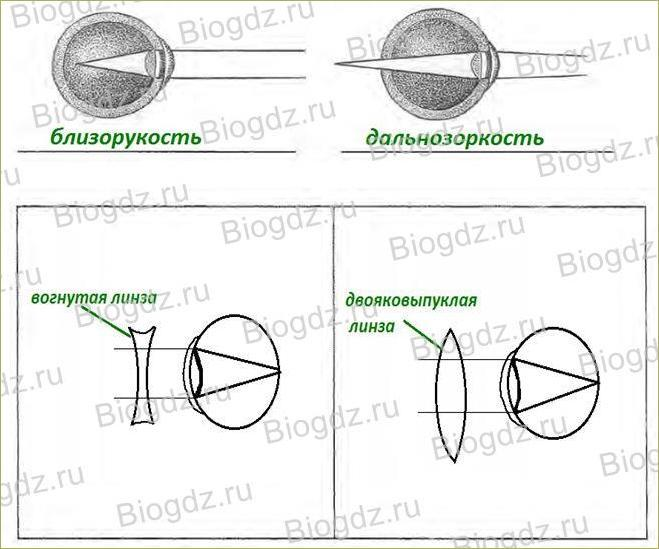 Зрительный анализатор. Строение и функции глаза - 3