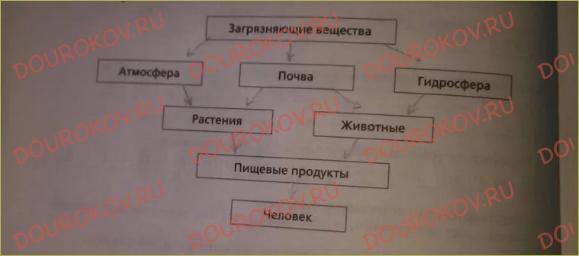 §1. Что изучает экология человека - 1