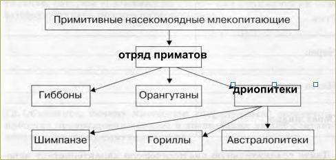 §20. Происхождение человека - 1