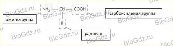 Глава 1. Молекулярный уровень - 3
