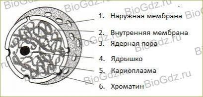 Глава 2. Клеточный уровень - 2